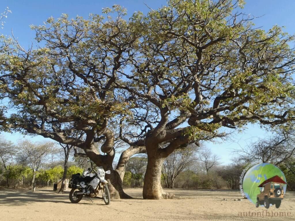 Une semaine au zoo : le Botswana